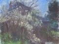 pear-tree-in-spring